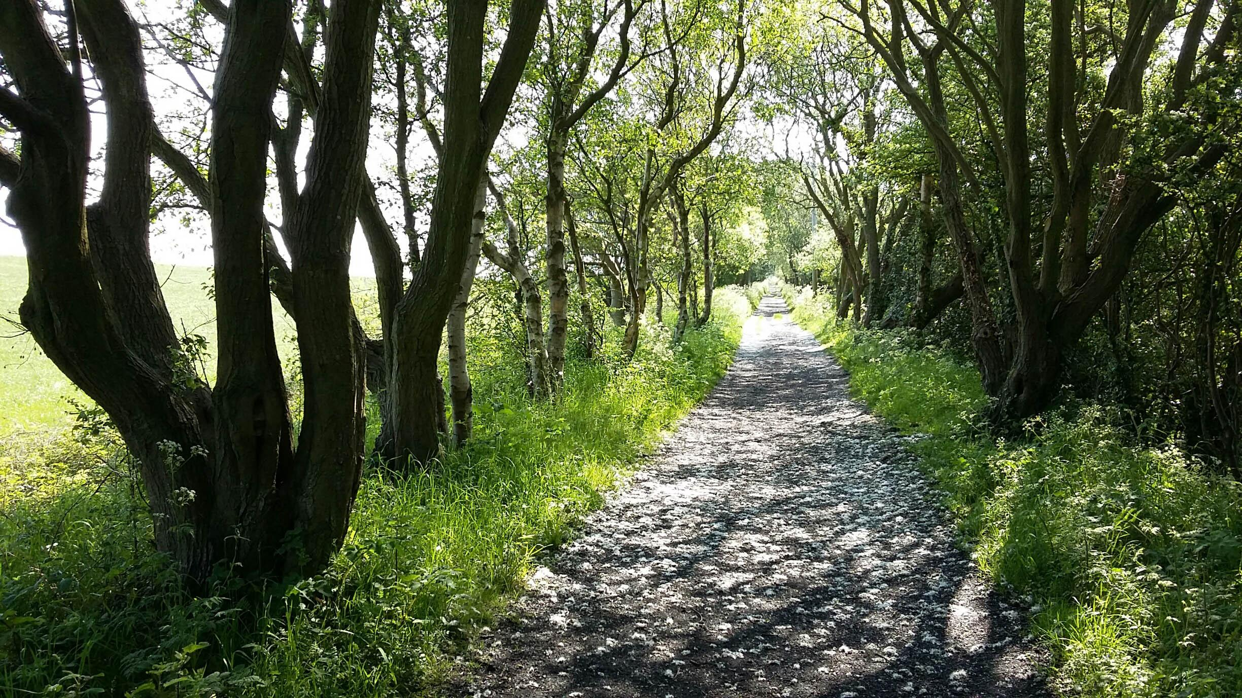 Picture of a stretch of the Cinder Track near Whitby